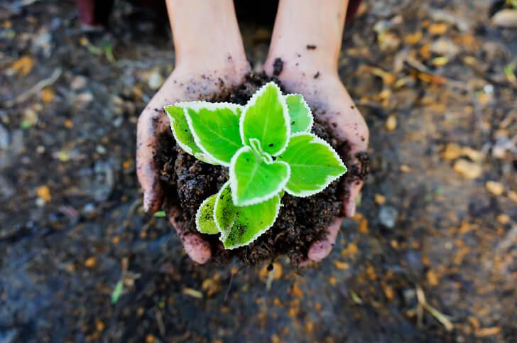 concime-per-piante