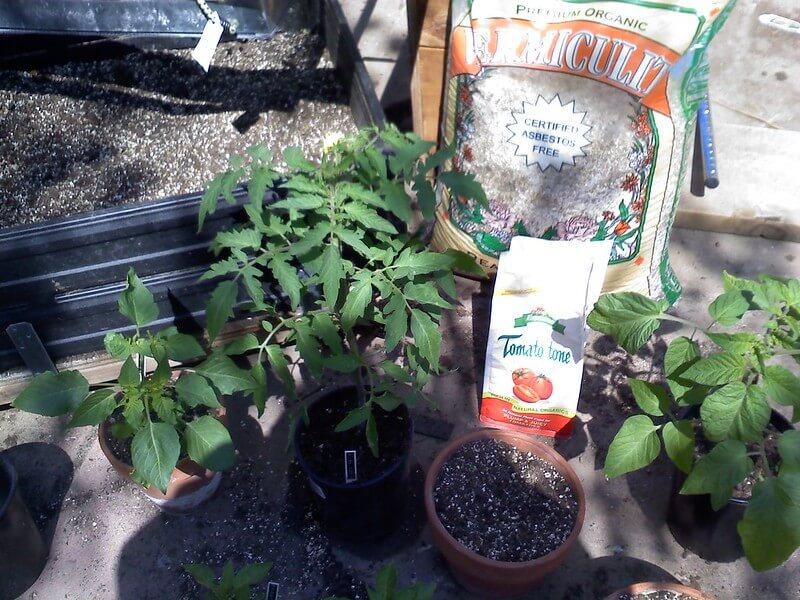 concime-per-pomodori