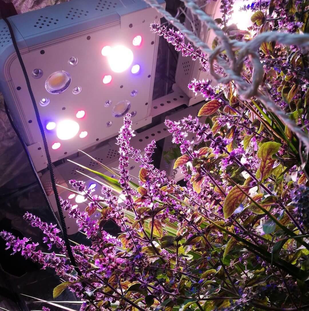 lampada-per-coltivazione