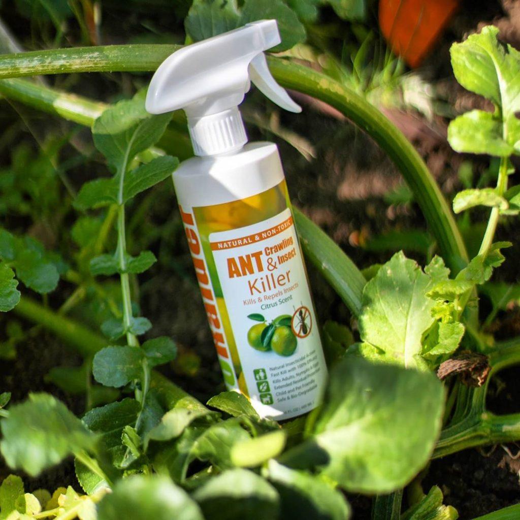 miglior-insetticida-per-formiche