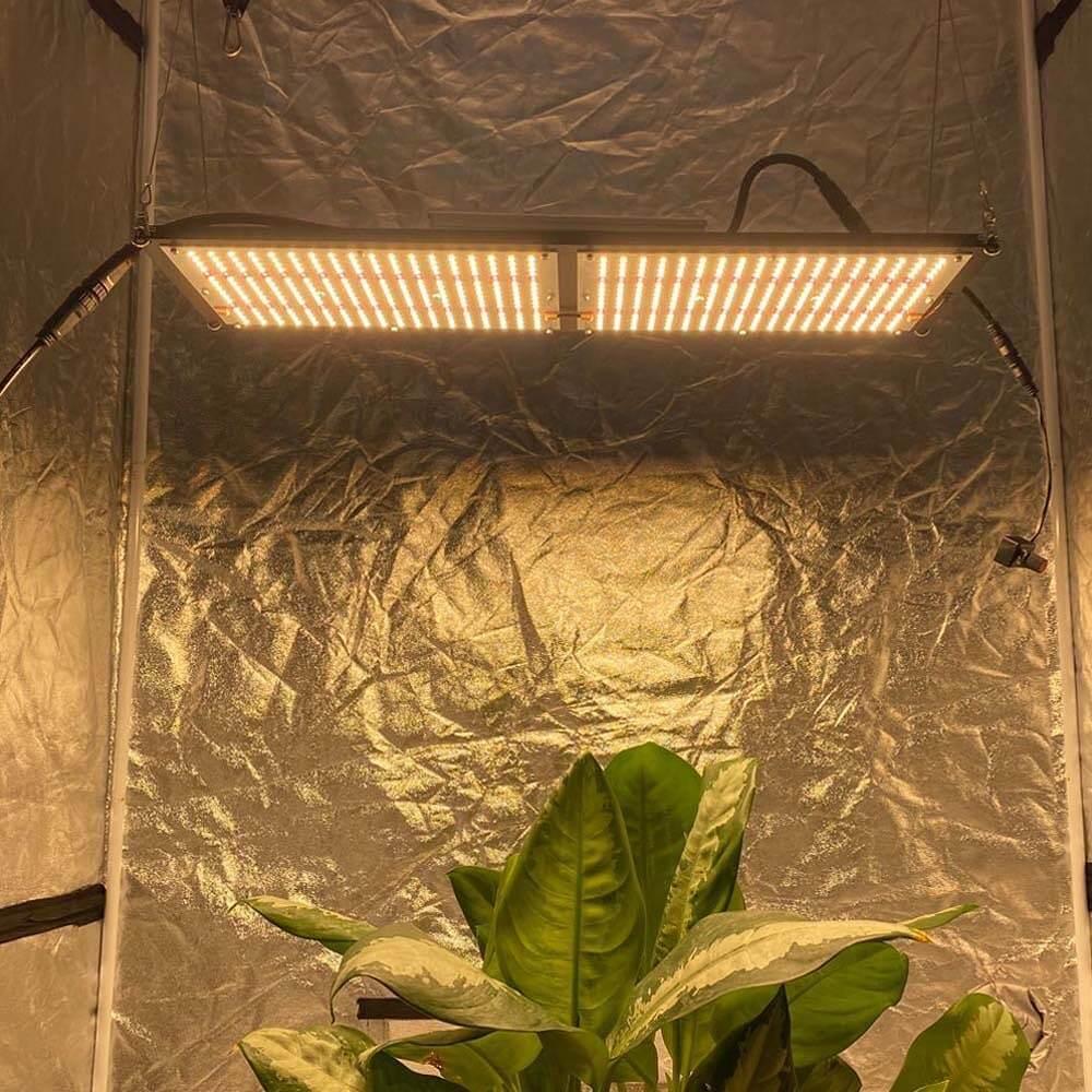 migliore-lampada-per-coltivazione