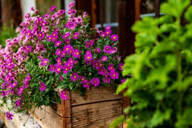 Fertilizzare-i-fiori