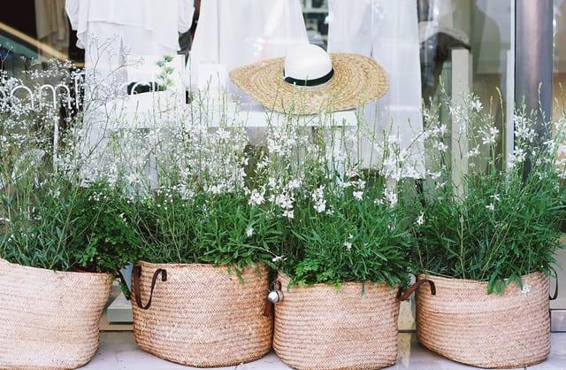 miglior-sacco-per-piante