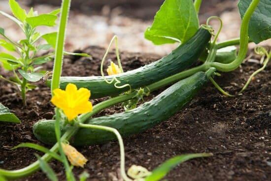 Quando-fertilizzare-lorto