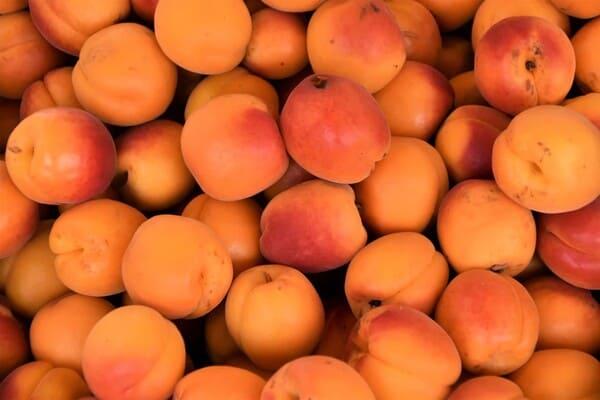 Albicocca-tipi-di-frutta