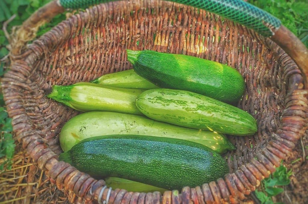 Coltivare-le-zucchine-Guida