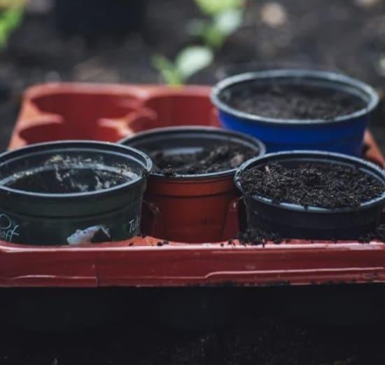 Coltivare-le-zucchine-in-vaso