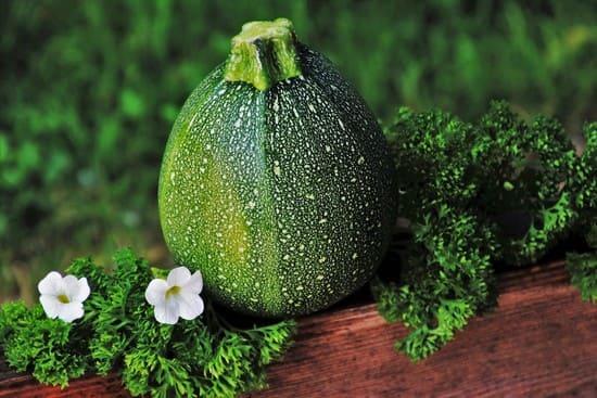 Come-piantare-le-zucchine-in-vaso