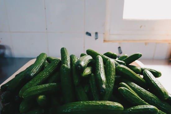Come-raccogliere-le-zucchine