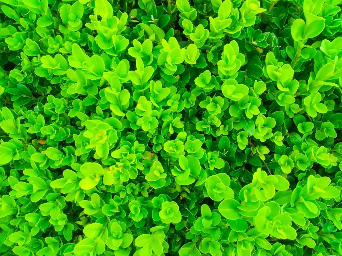 Come-rinverdire-le-piante