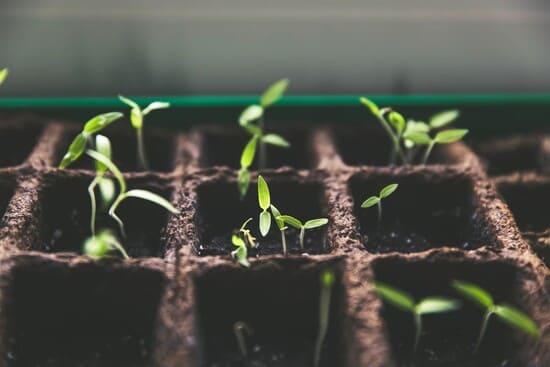 Come-seminare-le-zucchine