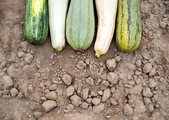 Quali-varieta-di-zucchine-posso-coltivare