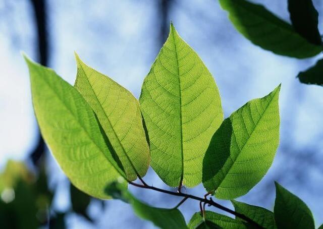 rinverdire-le-piante