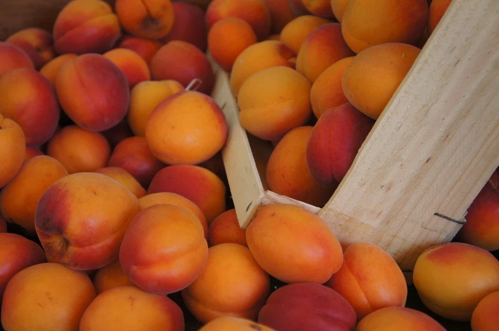 Albicocche-frutta-di-stagione-giugno