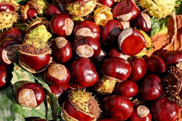 Castagna-frutta-di-stagione-a-ottobre
