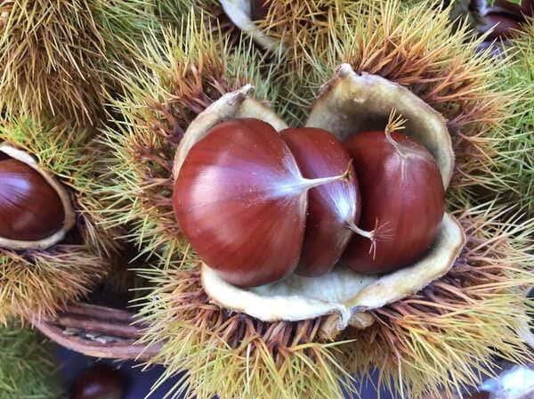Castagna-frutta-di-stagione-di-novembre