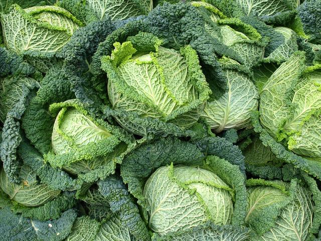 Cavolo-verza-verdura-di-stagione-di-dicembre