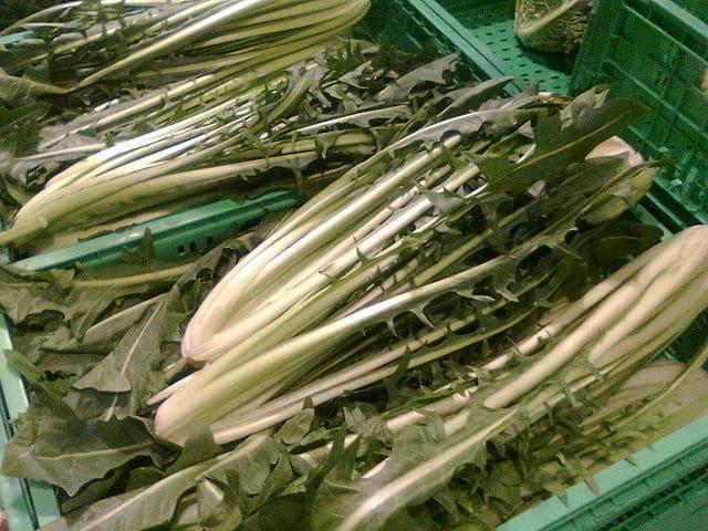 Cicoria-catalogna-verdura-di-stagione-di-novembre