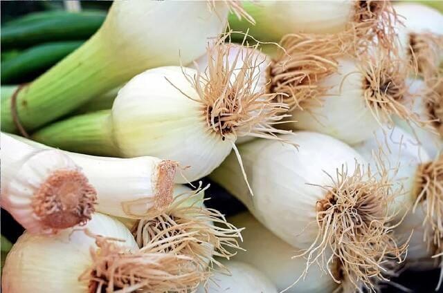 Cipollotti-verdura-di-stagione-a-giugno