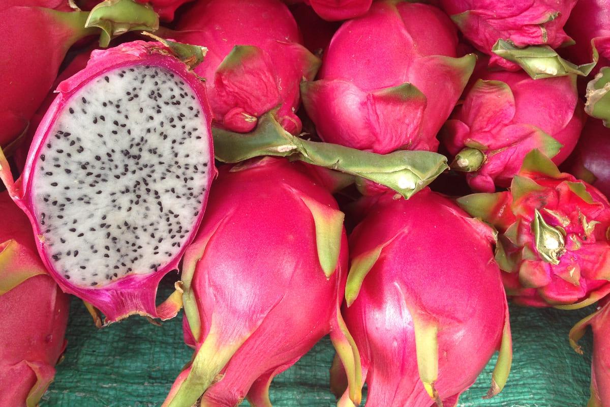 Come-coltivare-il-frutto-del-drago