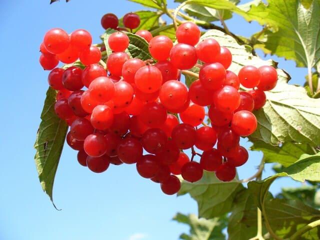 Frutta-autunnale-Mirtilli-rossi