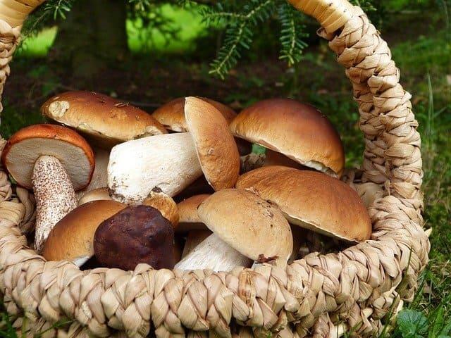 Funghi-verdura-di-stagione-di-novembre