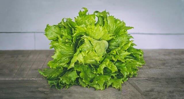 Lattuga-Iceberg-verdura-di-stagione-a-giugno