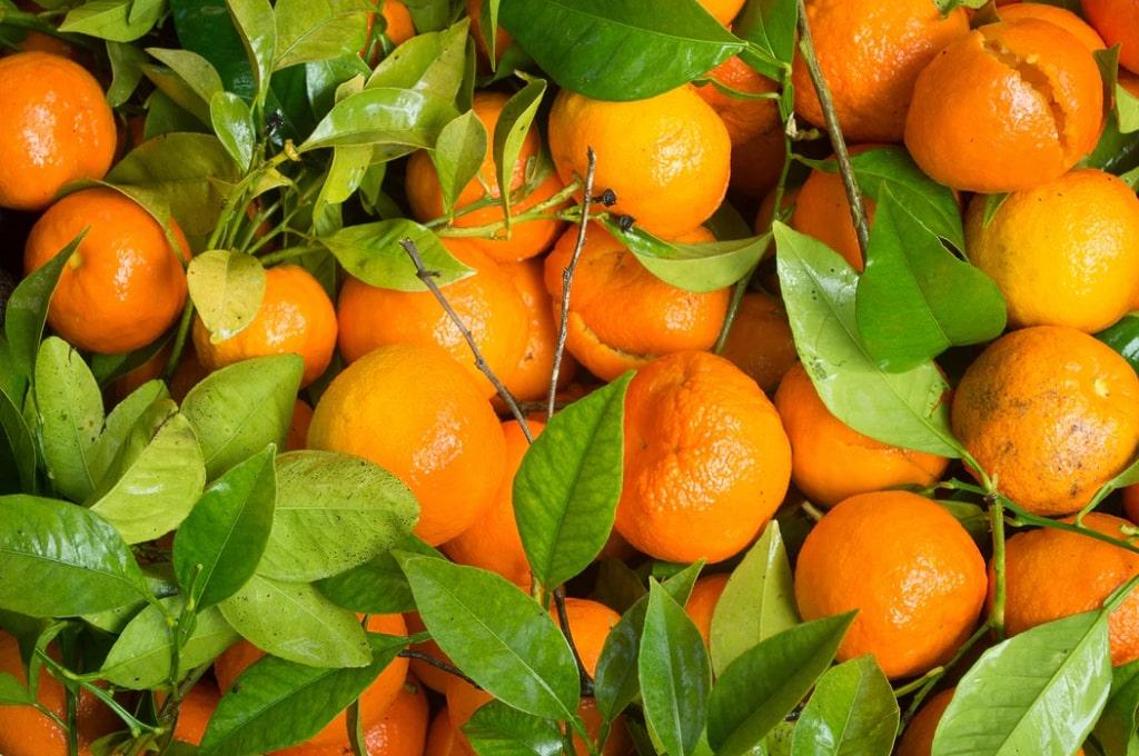 Mandarino-frutta-di-stagione-gennaio