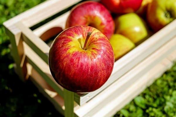 Mele-frutta-di-stagione-di-agosto