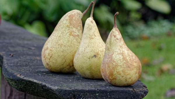 Pere-frutti-di-stagione-di-agosto