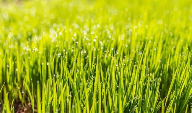 Prezzo-a-m-della-posa-di-erba-sintetica