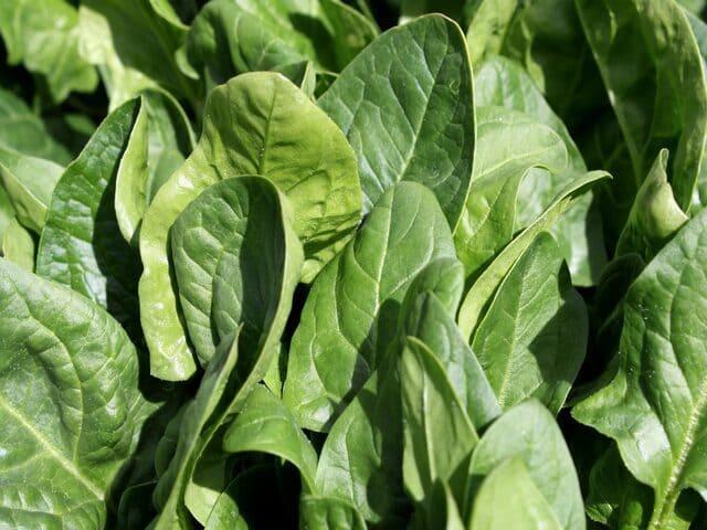 Spinaci-verdura-di-stagione-di-novembre