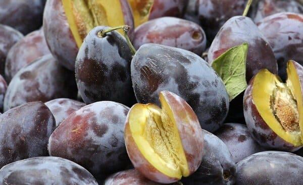 Susine-frutti-di-stagione-a-settembre
