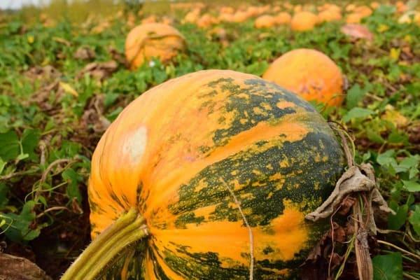 Zucca-frutti-di-stagione-a-settembre