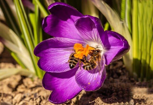 vespe-e-fiori