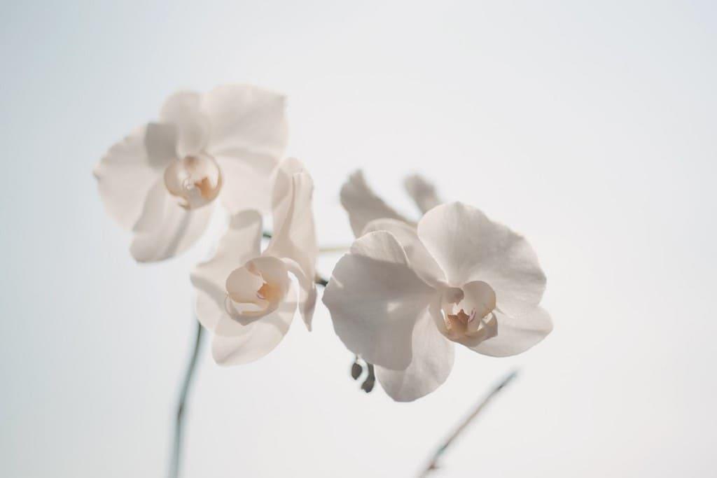 Coltivare-le-orchidee-in-vaso-di-vetro
