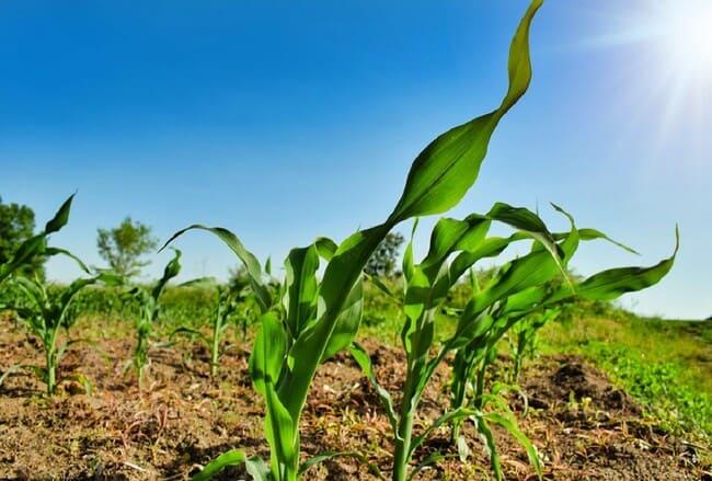 I-metodi-per-testare-il-pH-del-terreno