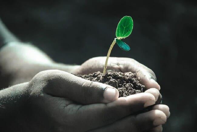 Perche-e-importante-conoscere-il-pH-del-terreno