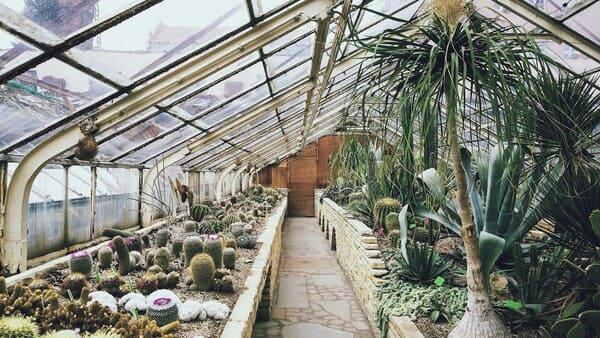Substrati-e-suoli-di-coltivazione-per-adromischus