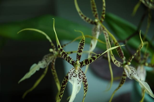 terriccio-per-orchidee