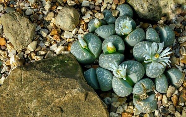 Salute-delle-succulente
