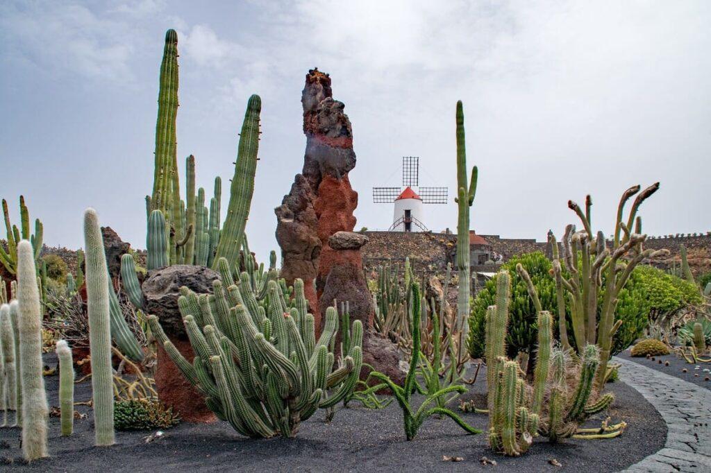 Cactus-della-lava